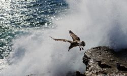 bird-jumping-off-cliff