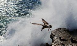 bird-jumping-off-cliff