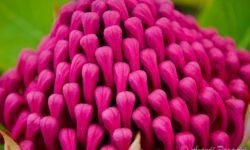 flower-buds-together